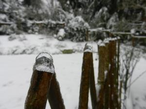 icy trellis