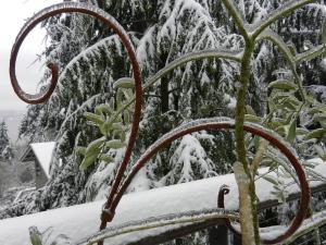 icy olive tree